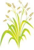 Planta de arroz ilustração stock