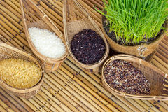 Planta de arroz Fotos de archivo libres de regalías