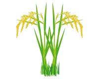 Planta de arroz isolada ilustração royalty free