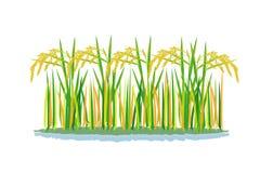 Planta de arroz isolada ilustração stock