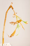 Planta de bambu de morte Foto de Stock