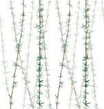A planta de bambu sae do teste padrão ilustração stock