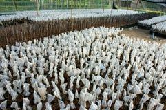 Planta de berçário, jardim do berçário, árvore de fruto Foto de Stock