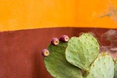 Planta de brotamento do cacto na frente de uma parede colorida Foto de Stock