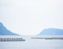 Planta de color salmón Imagenes de archivo