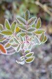 Planta de congelação. Fotos de Stock