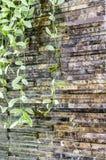 Planta de Dave na cachoeira da rocha Fotografia de Stock Royalty Free
