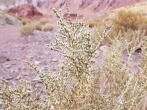 Planta de deserto em Valle del Arcoiris, San Pedro Atacama Desert, o Chile foto de stock