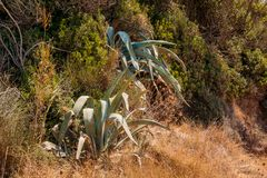 Planta de deserto suculento do jardim do cacto na estufa Paisagem do cacto Campo do cacto Jardim da flor Natureza selvagem Imagem de Stock