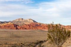 Planta de desierto con las colinas del barranco de la roca y el espacio rojos de la copia Foto de archivo libre de regalías