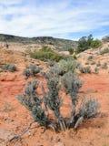 Planta de desierto del arbusto de la artemisa, cerca de St George Utah en el desierto occidental del sur los E.E.U.U. Fotos de archivo libres de regalías