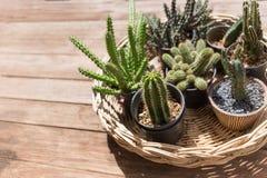Planta de desierto del cactus Imágenes de archivo libres de regalías