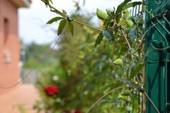 Planta de Detalle de una foto de stock