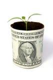 Planta de dinero Fotografía de archivo