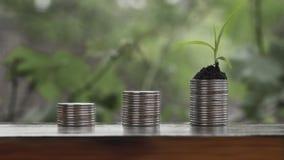Planta de dinero creciente de Cinemagraph en monedas almacen de video