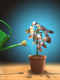 Planta de dinheiro Fotografia de Stock Royalty Free