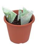 Planta de dinheiro Imagens de Stock Royalty Free