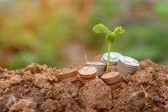Planta de dinheiro crescente do fundo no negócio das moedas fotos de stock