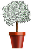 Planta de dinheiro em um potenciômetro Fotos de Stock Royalty Free