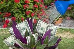 Planta de dinheiro que está sendo molhada Fotografia de Stock Royalty Free