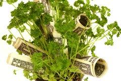 Planta de dinheiro - serie Fotos de Stock Royalty Free