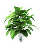 Planta de Eco Fotografia de Stock Royalty Free