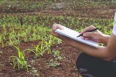 A planta de exame do agrônomo no campo de milho, pesquisadores fêmeas é de exame e tomando as notas na semente do milho colocam imagens de stock royalty free
