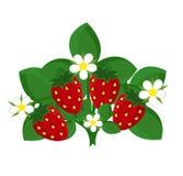 Planta de fresa Fotos de archivo