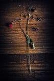 Planta de fresa en la madera fotografía de archivo