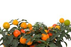 Planta de Grreen Imagens de Stock Royalty Free