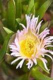 Planta de hielo Foto de archivo