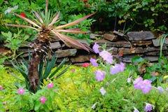 Planta de jardín de la yuca Imagenes de archivo