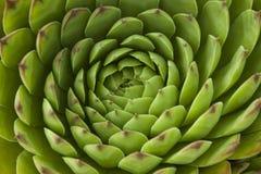 Planta de jardín natural Imágenes de archivo libres de regalías
