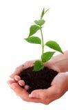 Planta de la agricultura Imágenes de archivo libres de regalías