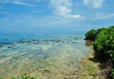 Planta de la alga marina durante la bajamar en la isla de Nusa Lembongan Foto de archivo