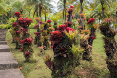Planta de la bromelia en el parque Fotos de archivo