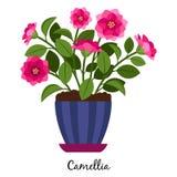 Planta de la camelia en pote ilustración del vector