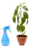Planta de la casa verde en un crisol Imagen de archivo libre de regalías