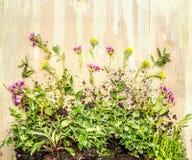 Planta de la cubierta de tierra con la raíz y floración en backgrund de madera rústico Fotografía de archivo libre de regalías