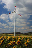 Planta de la energía eólica Imagenes de archivo