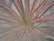 Planta de la estrella Imagen de archivo libre de regalías