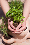 Planta de la explotación agrícola Fotografía de archivo libre de regalías