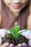 Planta de la explotación agrícola de la muchacha imágenes de archivo libres de regalías