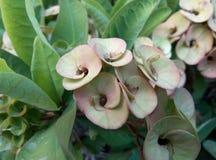 Planta de la flor fotografía de archivo