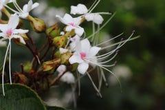 Planta de la flor blanca con el fondo verde suave imagen de archivo libre de regalías
