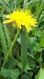 planta de la flor del verde amarillo fotos de archivo