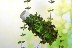 Planta de la hierba de la naturaleza Fotos de archivo