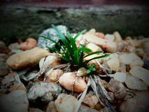 Planta de la hierba verde en las piedras blancas imagenes de archivo