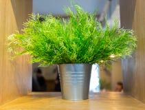 Planta de la hierba verde en pote del vintage en fondo del verde menta del frente de la tabla Artículo de adornamiento interior E Fotografía de archivo libre de regalías