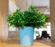Planta de la hierba verde en pote del vintage en fondo del verde menta del frente de la tabla Artículo de adornamiento interior E Foto de archivo libre de regalías